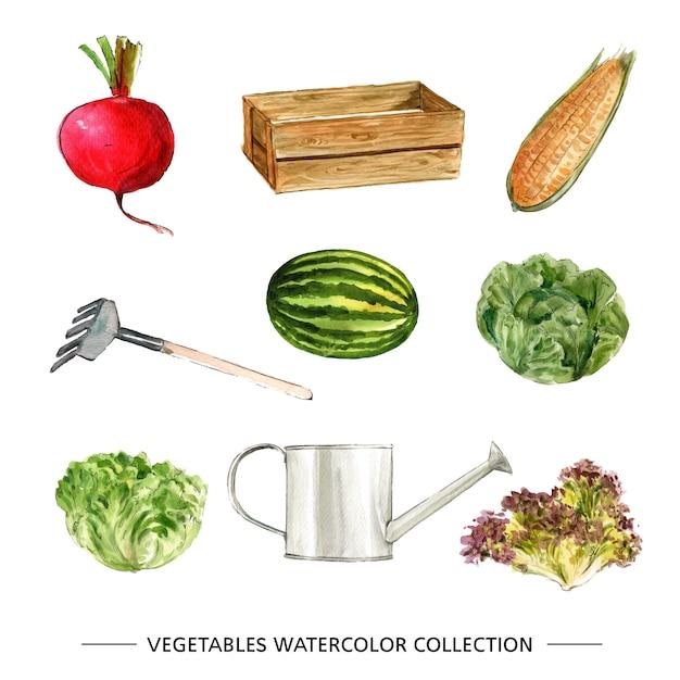 Collection De Légumes Aquarelle Isolé Vecteur gratuit
