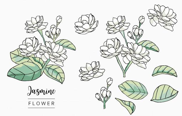 Collection De Logo Jasmin Couleur Avec Feuilles, Géométrique. Vecteur Premium