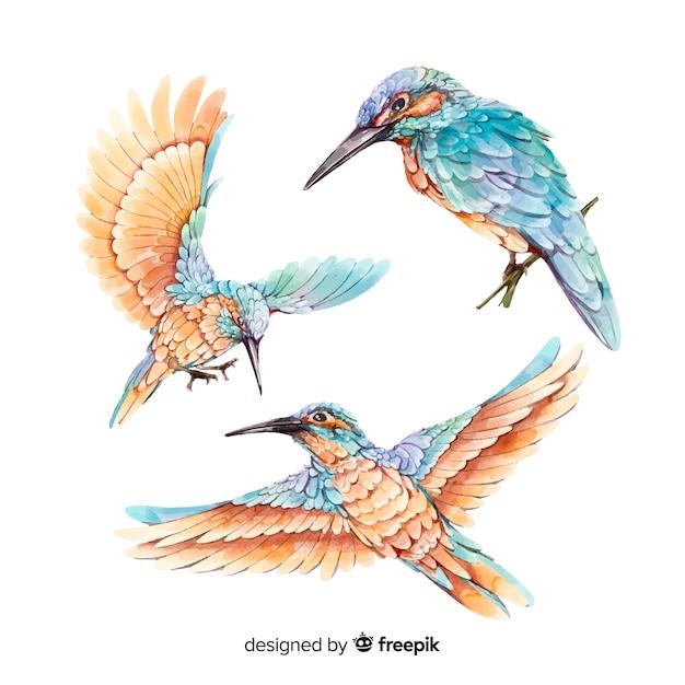 Collection d'oiseaux aquarelles réalistes Vecteur gratuit