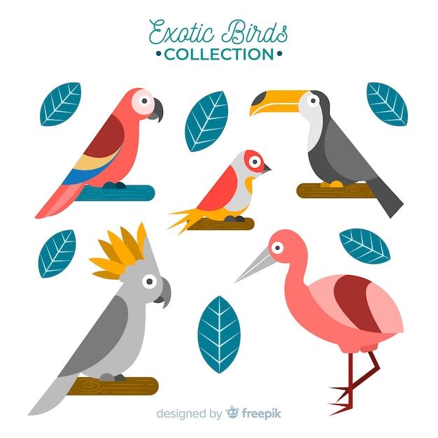 Collection d'oiseaux exotiques design plat Vecteur gratuit