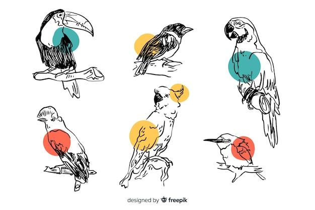 Collection d'oiseaux exotiques dessinés à la main Vecteur gratuit