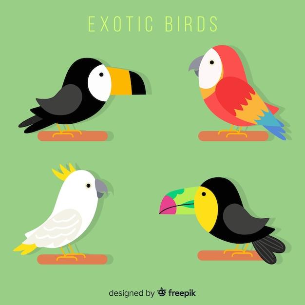 Collection d'oiseaux exotiques de plat Vecteur gratuit