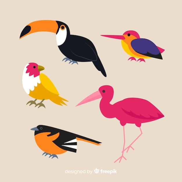 Collection D'oiseaux Exotiques Plats Vecteur gratuit