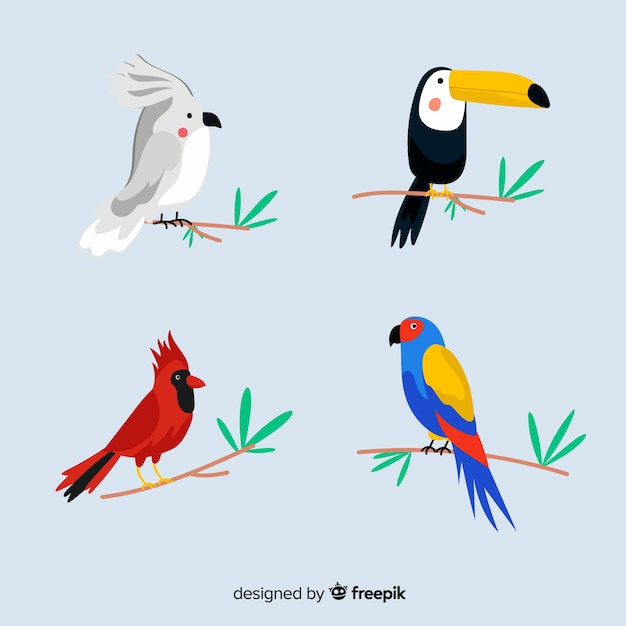 Collection d'oiseaux sauvages tropicaux exotiques Vecteur gratuit