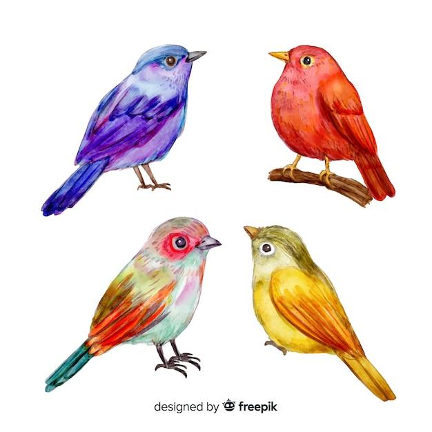 Collection d'oiseaux tropicaux aquarelles Vecteur gratuit