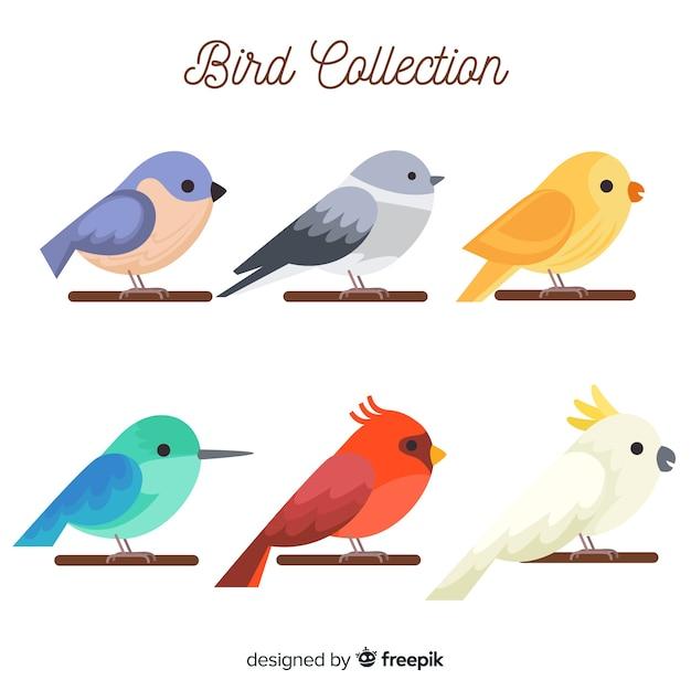 Collection D'oiseaux Vecteur gratuit