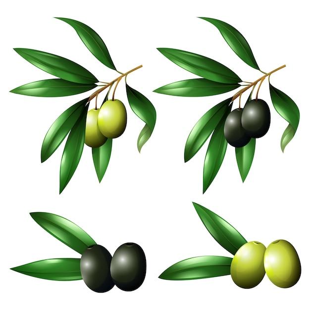 Collection d'olives de couleur Vecteur gratuit