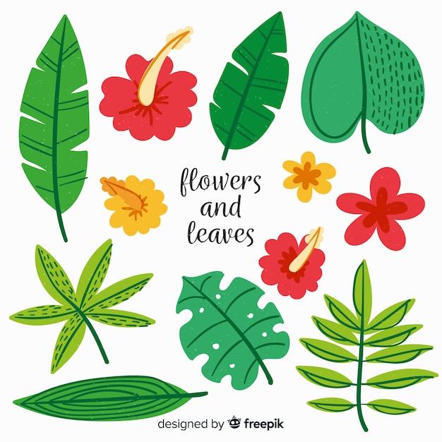Collection de plantes dessinées à la main Vecteur gratuit