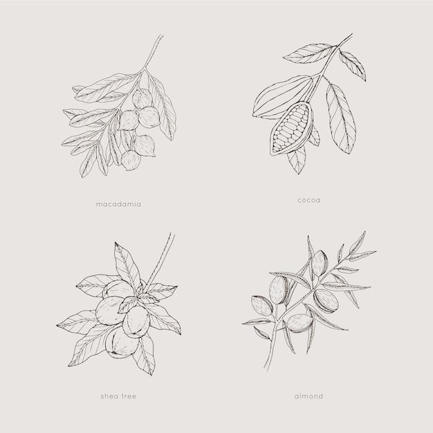 Collection De Plantes Monochromes Dessinées à La Main Vecteur Premium