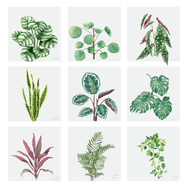 Collection de plantes ornementales dessinées à la main Vecteur gratuit