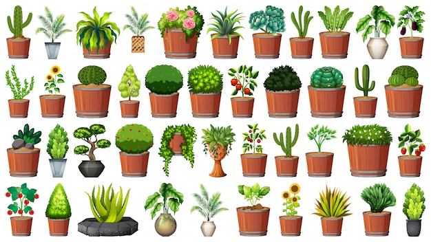 Collection de plantes en pot sur blanc Vecteur gratuit