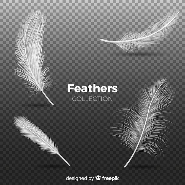 Collection de plumes réalistes Vecteur gratuit