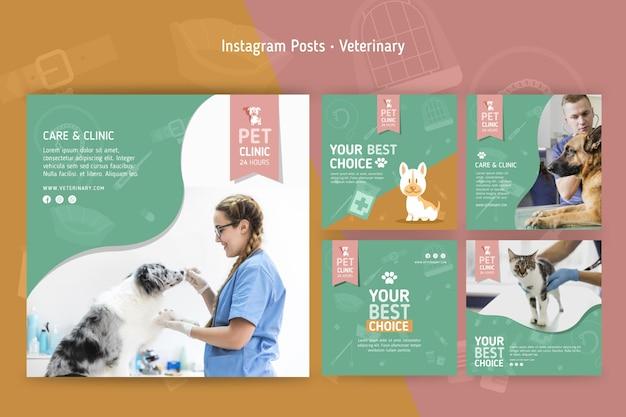 Collection De Publications Instagram Pour Vétérinaire Vecteur Premium