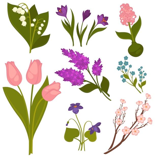 Collection réaliste de fleurs de printemps sur blanc. Vecteur Premium