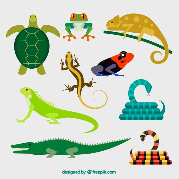 Collection de reptile Vecteur Premium