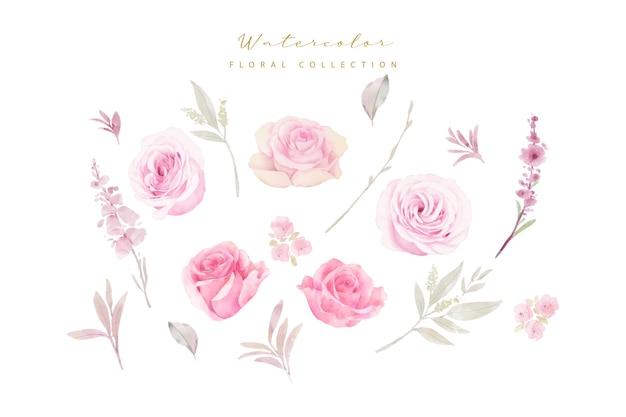 Collection De Roses Aquarelle Vecteur gratuit