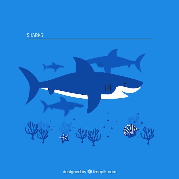 Collection Sharks Vecteur gratuit
