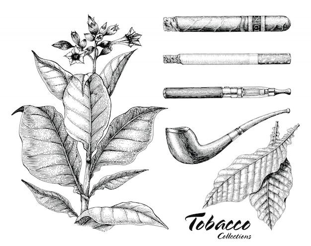 Collection De Tabac Dessin Style Vintage à La Main Vecteur Premium
