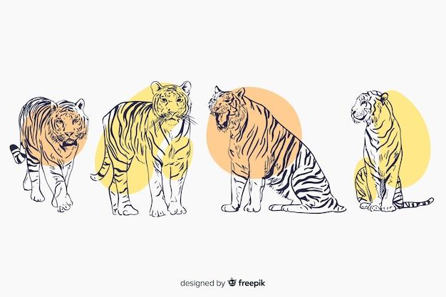 Collection de tigres sauvages dessinés à la main Vecteur gratuit