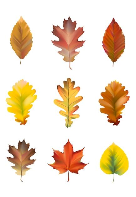 Collection de vecteur de feuilles d'automne Vecteur gratuit