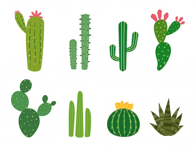 Collections de cactus vectorielles Vecteur Premium