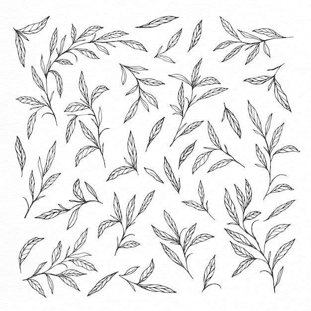 Collections de feuilles et de branches dessinées à la main Vecteur gratuit
