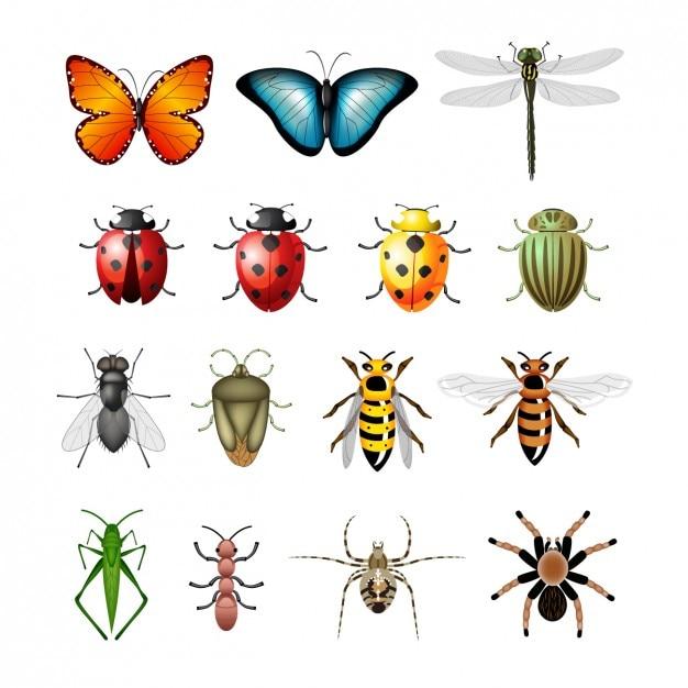 Coloré Insectes Collection Vecteur gratuit