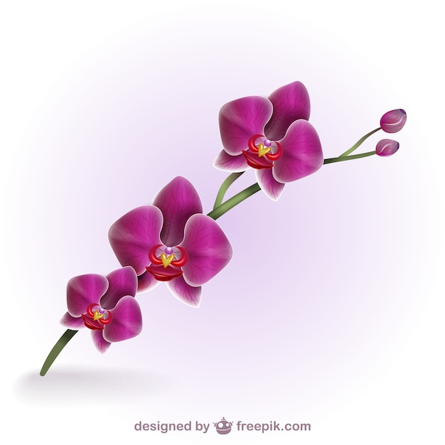 moth orchid coloring pages - photo#44