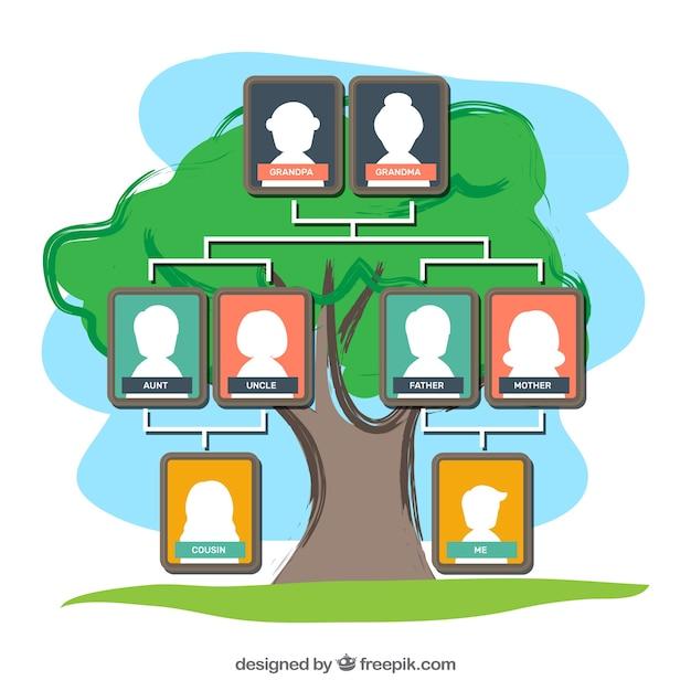Colored modèle d'arbre généalogique Vecteur gratuit