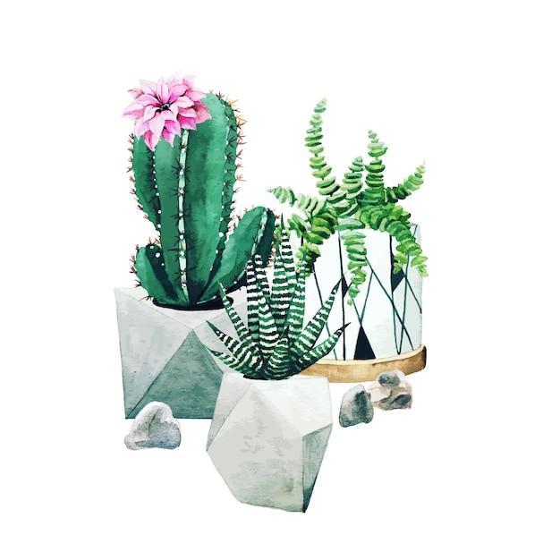 Composition De Plantes De Cactus En Pot Et De Plantes Succulentes Vecteur Premium