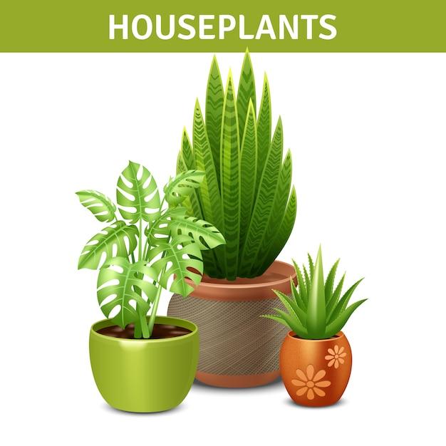 Composition réaliste des plantes d'intérieur Vecteur gratuit