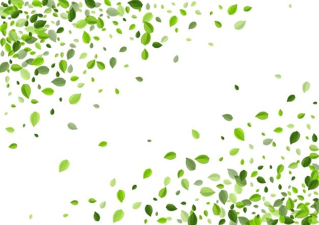 Concept De Fines Herbes De Feuilles Herbeuses. Fly Greens Wallpaper. Illustration De Thé De Feuille De Marais. Bannière De Vent De Feuillage. Vecteur Premium