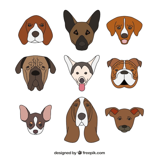 Conception de collection de chien Vecteur gratuit