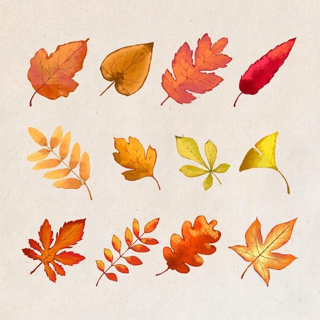 Conception De Feuilles De Forêt D'automne Vecteur gratuit