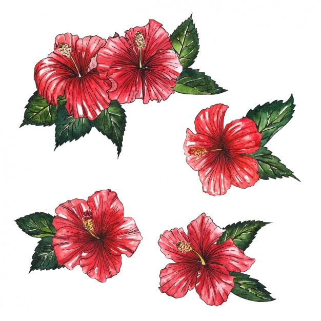 Conception de fleurs rouges Vecteur gratuit