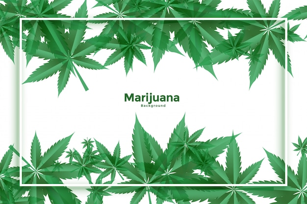 Conception De Fond De Feuilles Vertes De Marijuana Et De Cannabis Vecteur gratuit