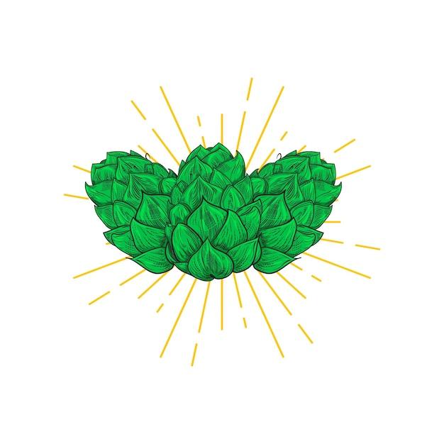 Conception De Hop Bière. Style De Gravure Vecteur Premium