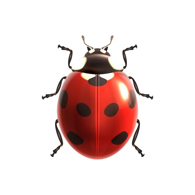 Conception ladybird Vecteur gratuit