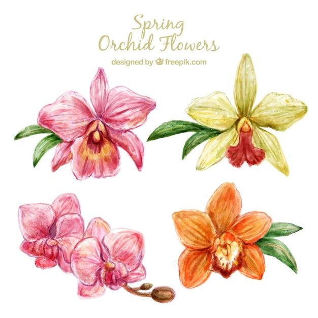 Conception mignonne de fleurs d'orchidée Vecteur gratuit