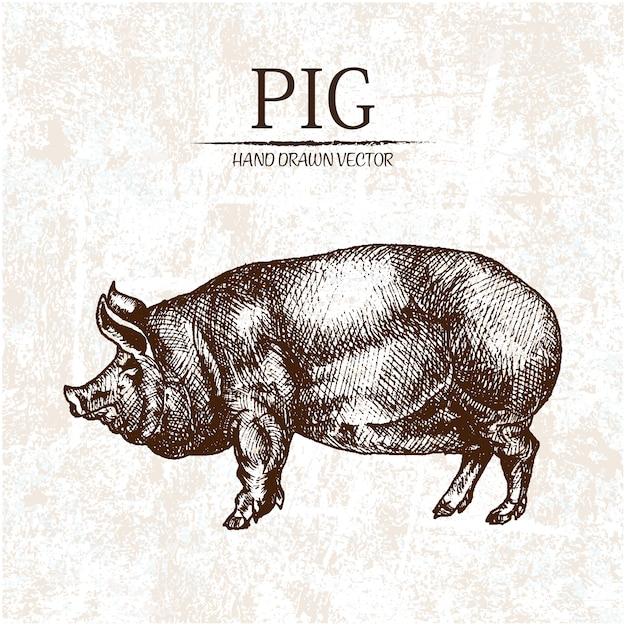 Conception de porc tirée à la main Vecteur gratuit