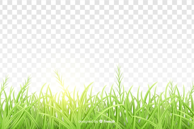 Conception réaliste de frontière d'herbe verte Vecteur gratuit