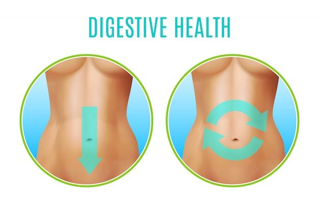 Conception réaliste de la santé digestive Vecteur gratuit