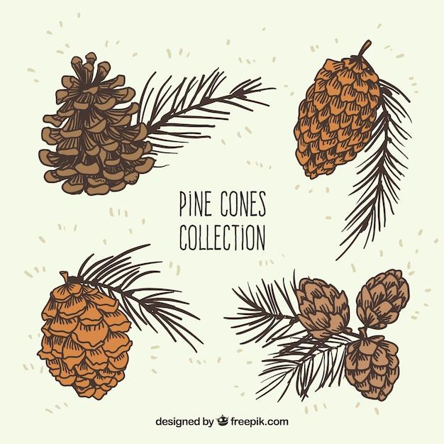 Cônes De Pin Collection Illustration Vecteur gratuit