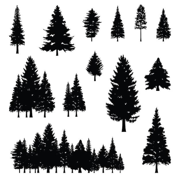 Conifère sapin de pin conifère arbre forêt silhouette Vecteur Premium