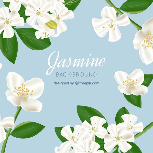 Contexte jasmine en style réaliste Vecteur gratuit
