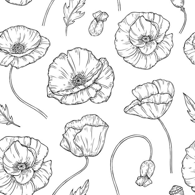 Coquelicots Fleur Croquis Dessin Mur Oeuvre Plante Vecteur Premium