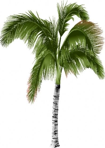 C t de palmier t l charger des vecteurs gratuitement for Fabriquer un palmier artificiel