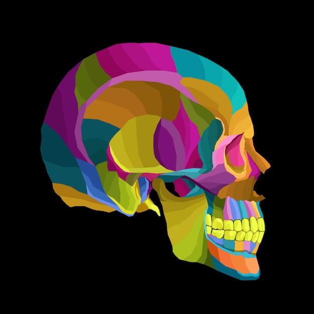 Crâne coloré Vecteur Premium