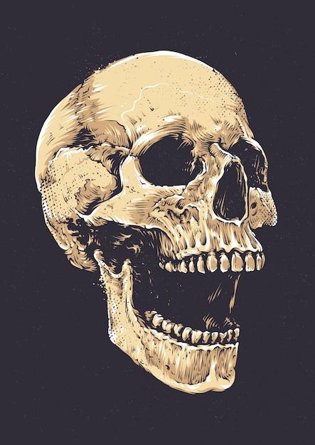 Crâne dessiné à la main Vecteur gratuit