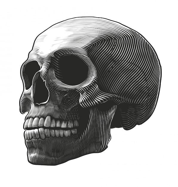Crâne humain dans le style de gravure Vecteur Premium